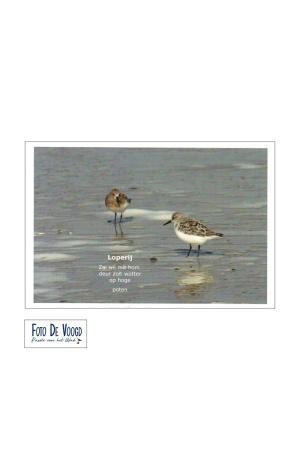 Fotokaart Gronings Loperij