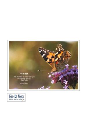 Fotokaart Gronings Vlinder
